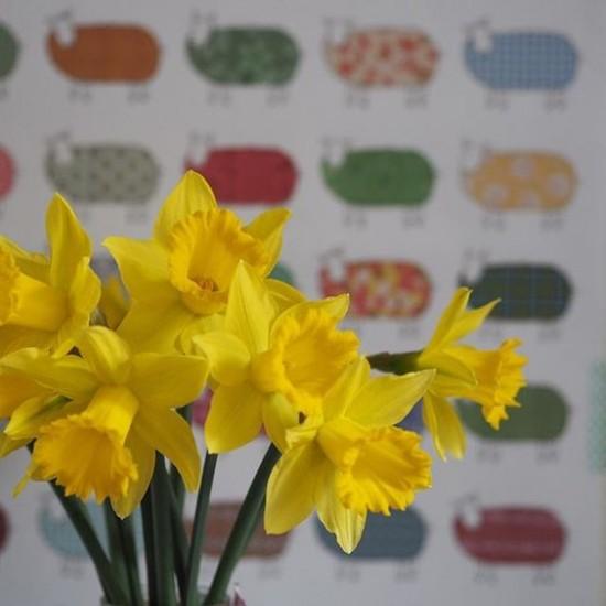 Mary Kilvert - Daffodils