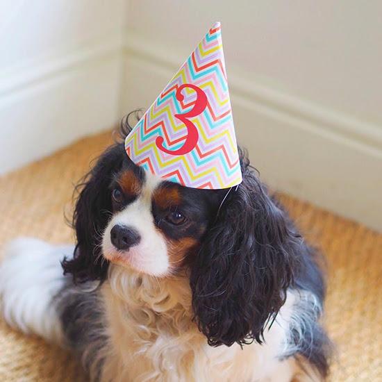 Mary Kilvert - Bertie wearing party hat
